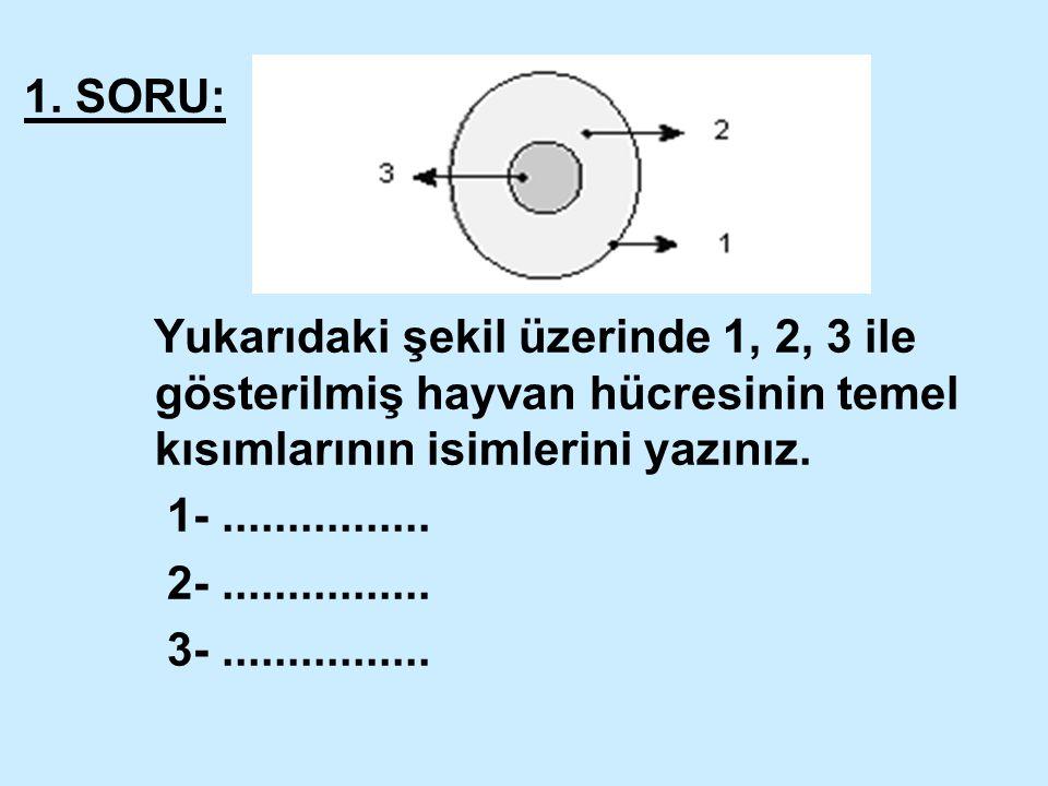 1. SORU: