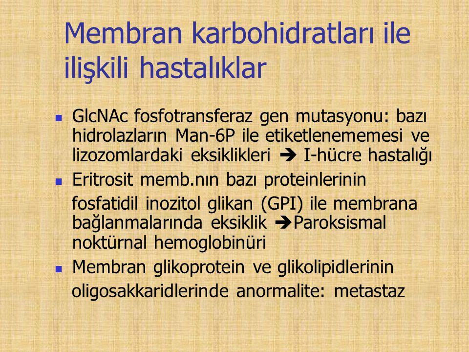 Membran karbohidratları ile ilişkili hastalıklar