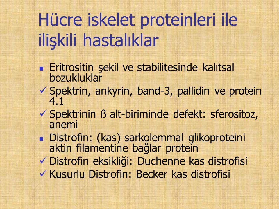 Hücre iskelet proteinleri ile ilişkili hastalıklar