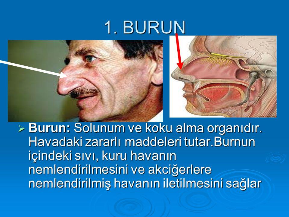 1. BURUN