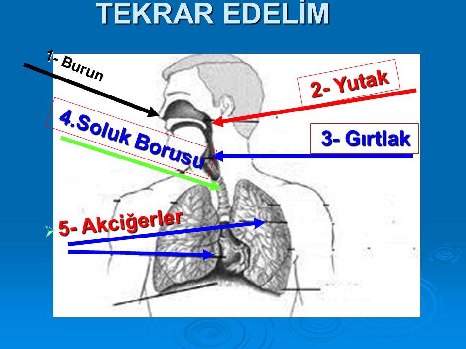 TEKRAR EDELİM 2- Yutak 4.Soluk Borusu 3- Gırtlak 5- Akciğerler