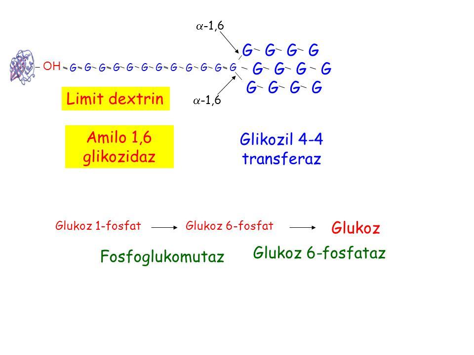 G G G G G G G G G G G G Limit dextrin Amilo 1,6 glikozidaz