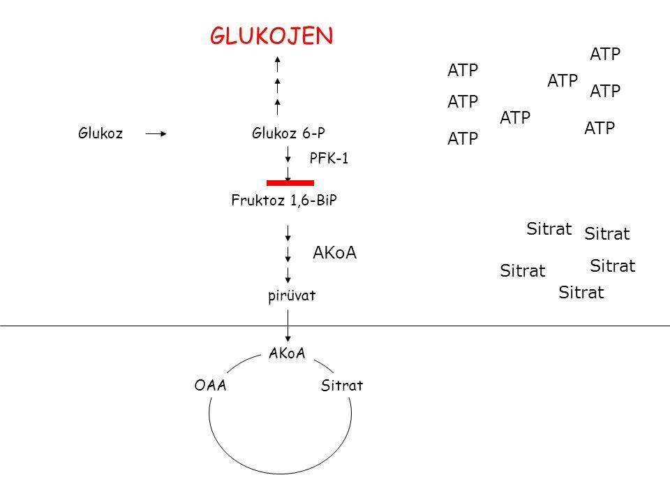 GLUKOJEN ATP ATP ATP ATP ATP ATP ATP ATP Sitrat Sitrat AKoA Sitrat