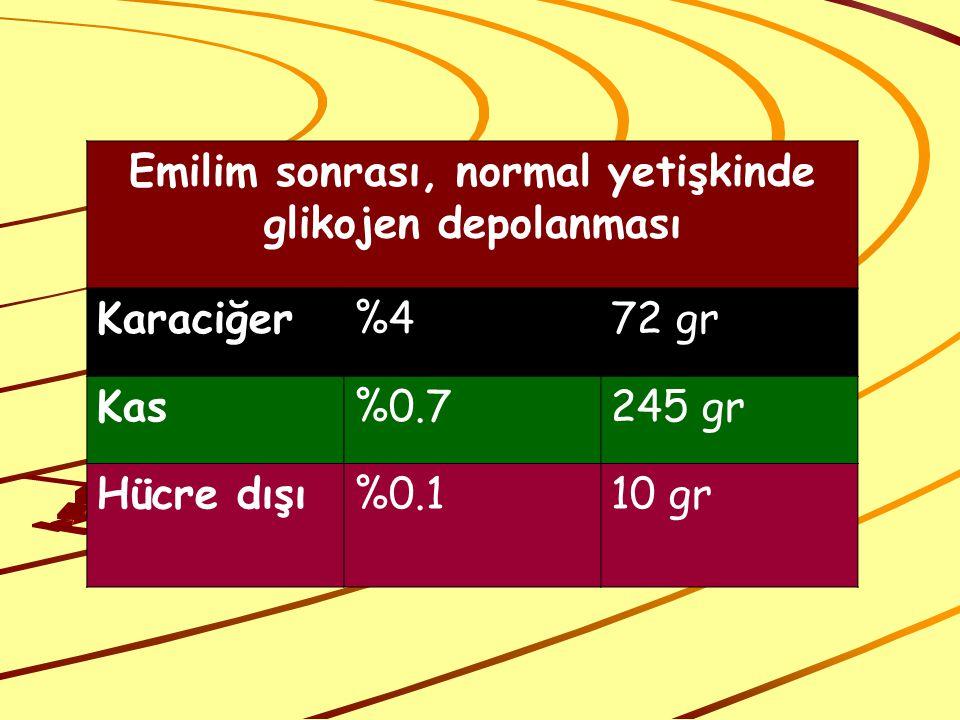 Emilim sonrası, normal yetişkinde glikojen depolanması