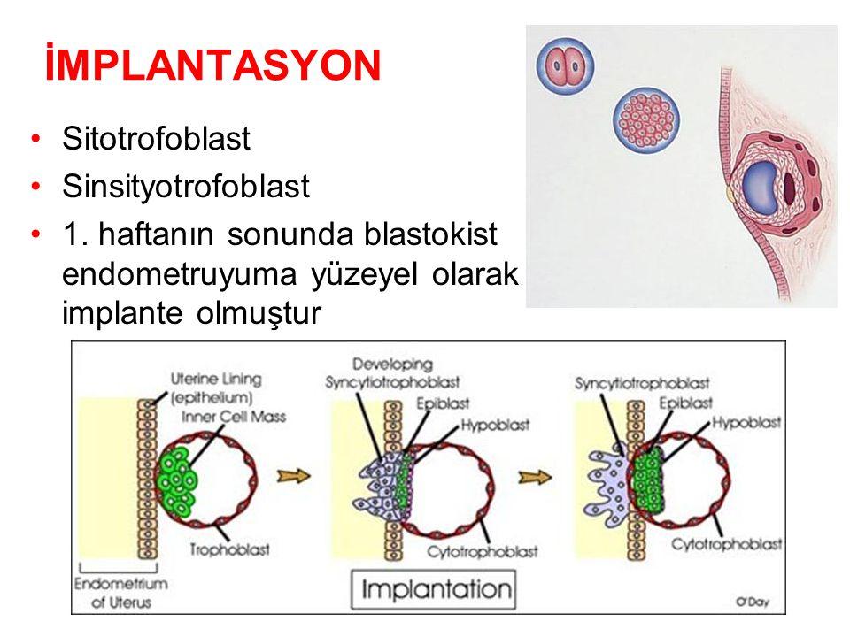İMPLANTASYON Sitotrofoblast Sinsityotrofoblast
