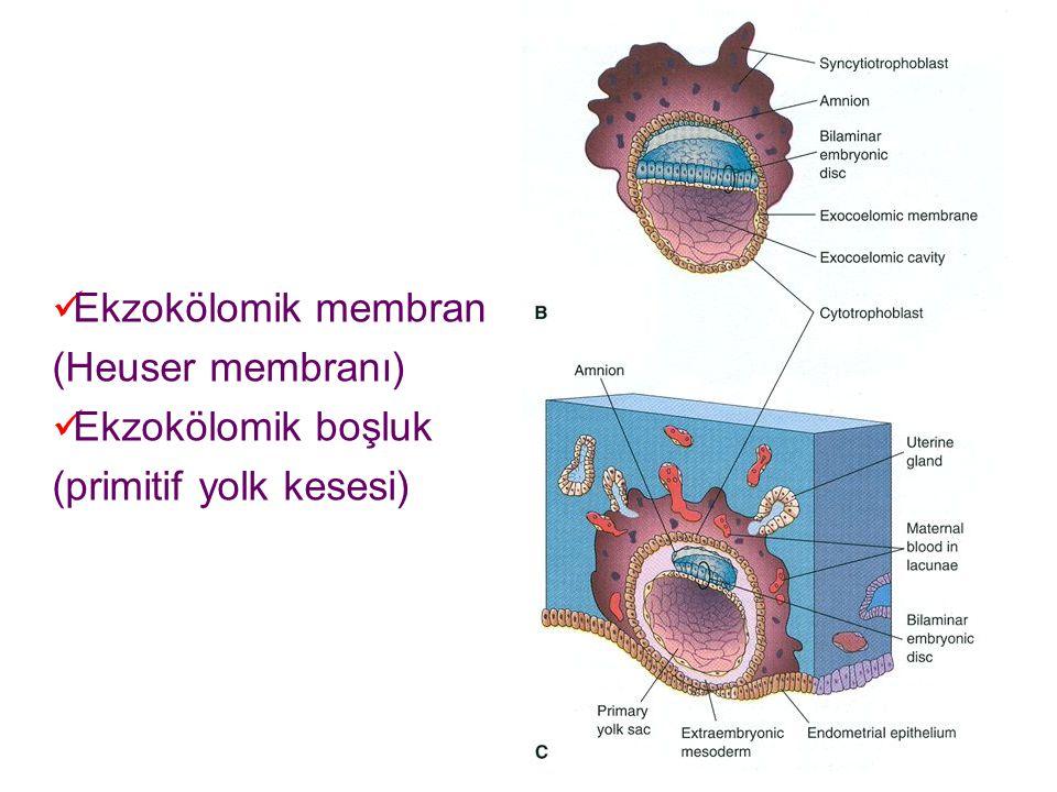 Ekzokölomik membran (Heuser membranı)