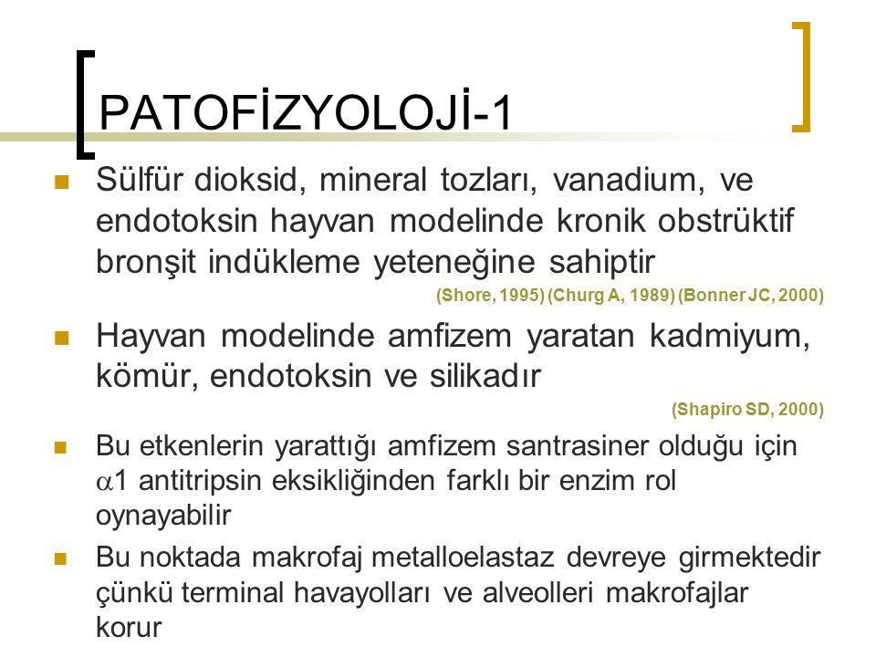 PATOFİZYOLOJİ-1 Sülfür dioksid, mineral tozları, vanadium, ve endotoksin hayvan modelinde kronik obstrüktif bronşit indükleme yeteneğine sahiptir.