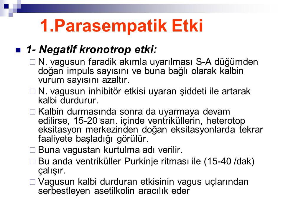 1.Parasempatik Etki 1- Negatif kronotrop etki: