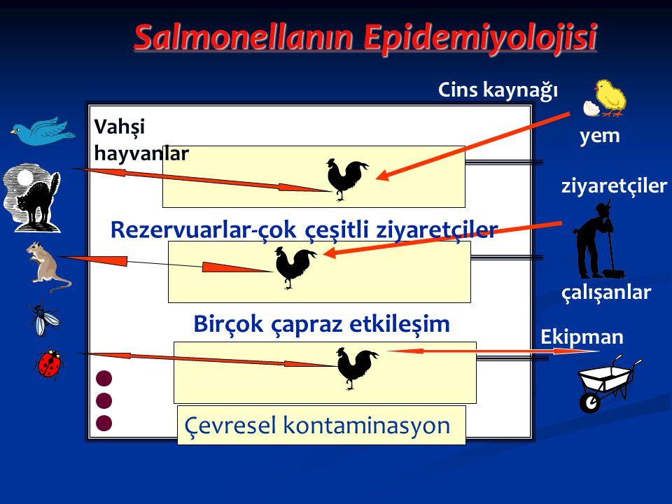 Salmonellanın Epidemiyolojisi