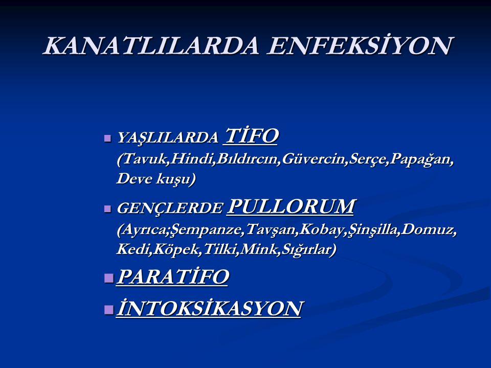 KANATLILARDA ENFEKSİYON