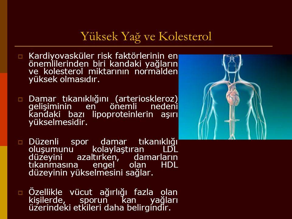 Yüksek Yağ ve Kolesterol