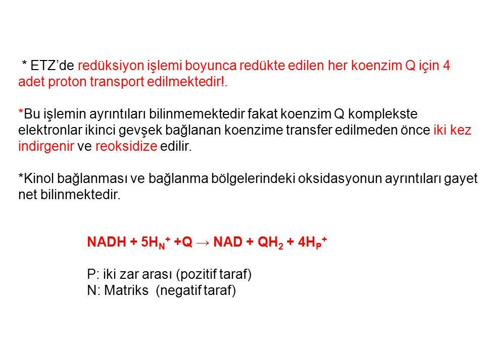 NADH + 5HN+ +Q → NAD + QH2 + 4HP+ P: iki zar arası (pozitif taraf)