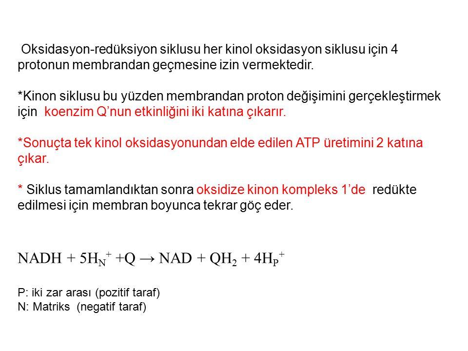 NADH + 5HN+ +Q → NAD + QH2 + 4HP+