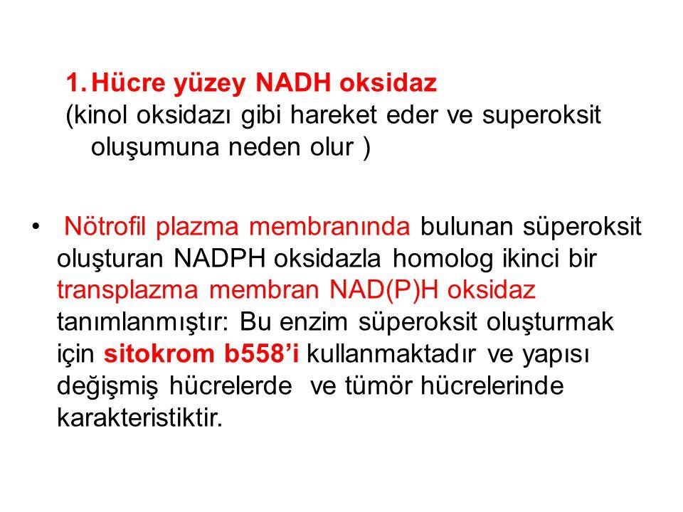 Hücre yüzey NADH oksidaz