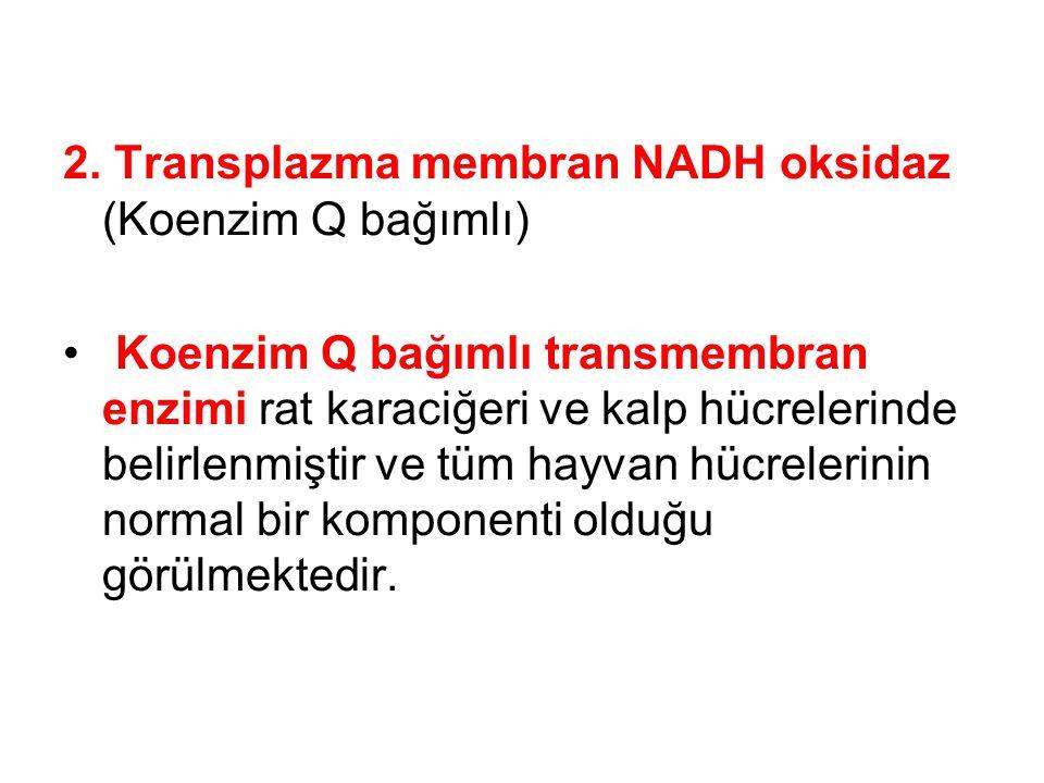 2. Transplazma membran NADH oksidaz (Koenzim Q bağımlı)