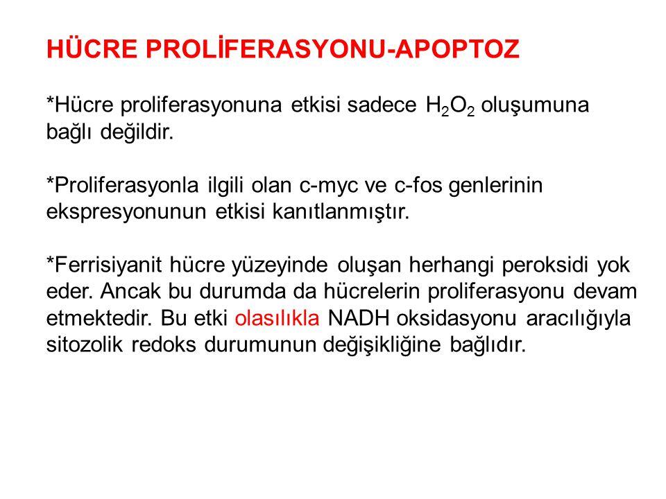 HÜCRE PROLİFERASYONU-APOPTOZ