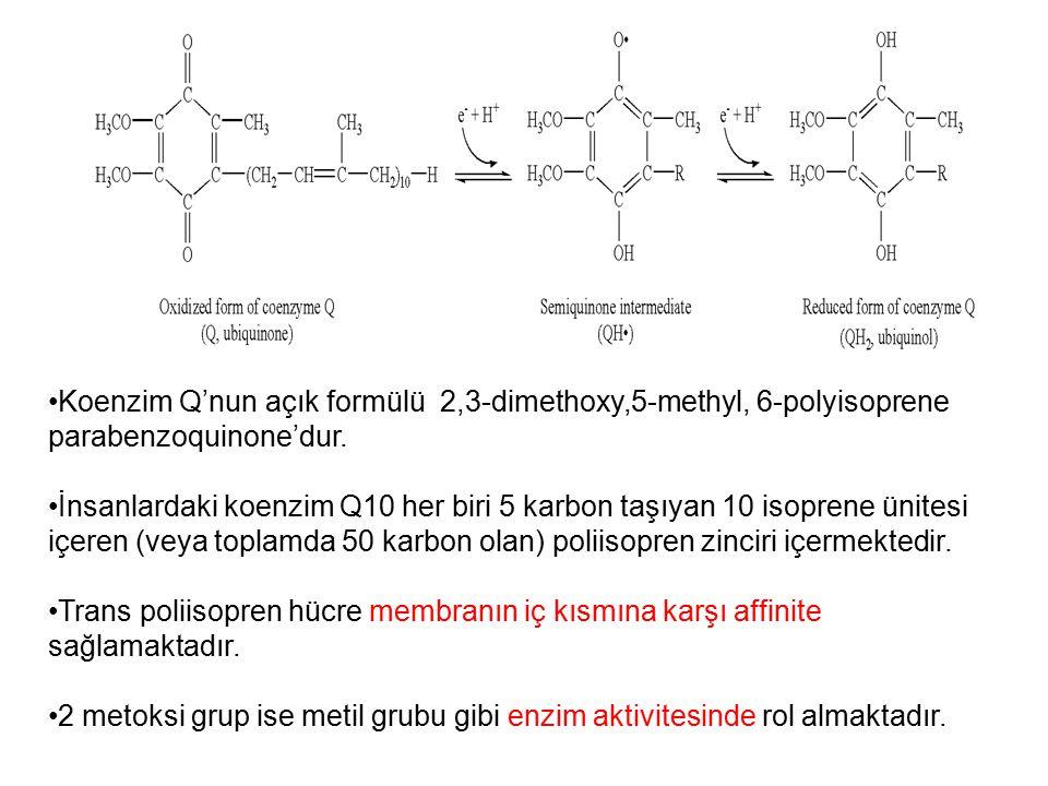 Koenzim Q'nun açık formülü 2,3-dimethoxy,5-methyl, 6-polyisoprene