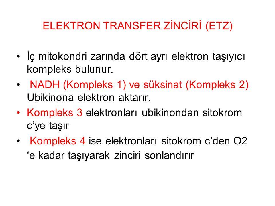 ELEKTRON TRANSFER ZİNCİRİ (ETZ)
