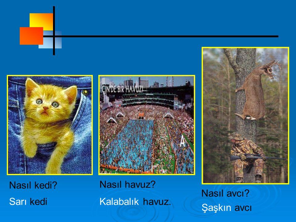 Nasıl kedi Nasıl havuz Nasıl avcı Sarı kedi Kalabalık havuz. Şaşkın avcı