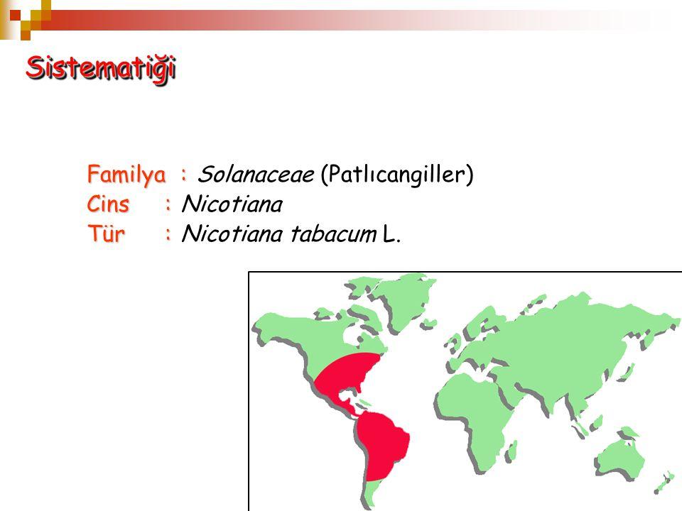 Sistematiği Familya : Solanaceae (Patlıcangiller) Cins : Nicotiana