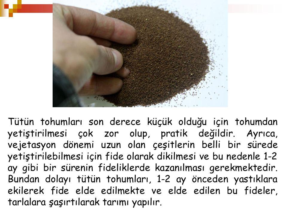 Tütün tohumları son derece küçük olduğu için tohumdan yetiştirilmesi çok zor olup, pratik değildir.