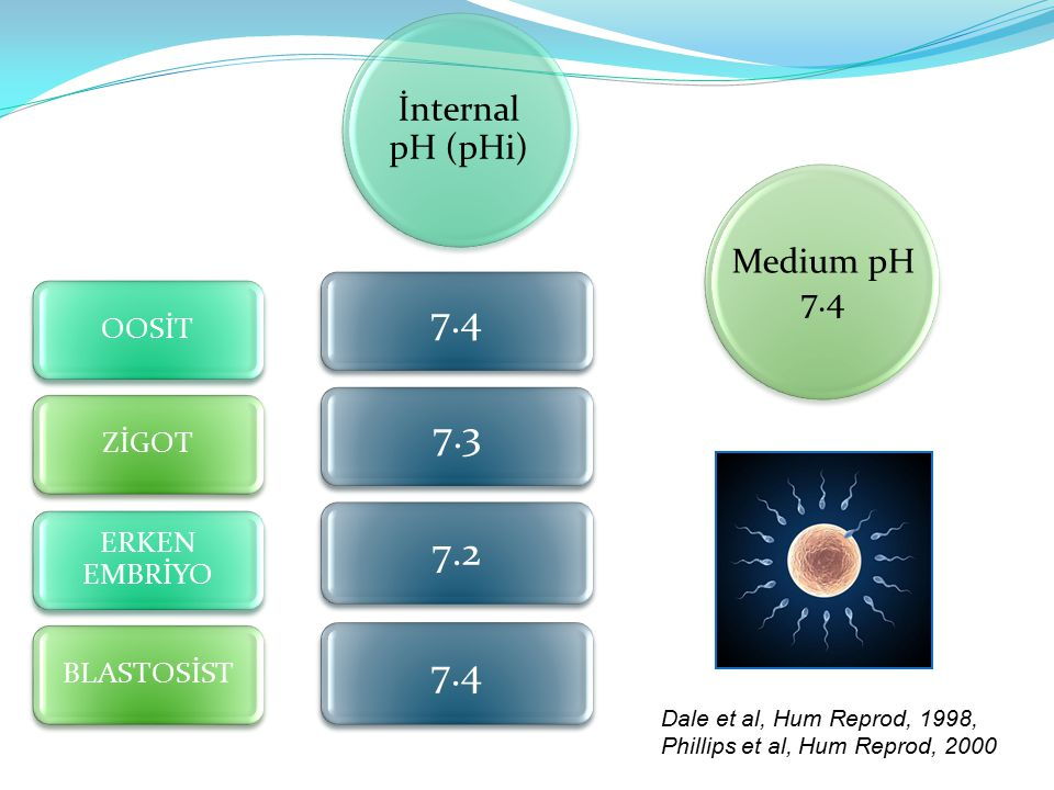 7.4 7.3 7.2 7.4 İnternal pH (pHi) Medium pH 7.4 OOSİT ZİGOT