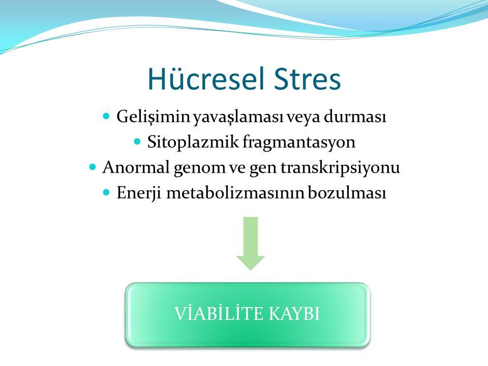 Hücresel Stres VİABİLİTE KAYBI Gelişimin yavaşlaması veya durması