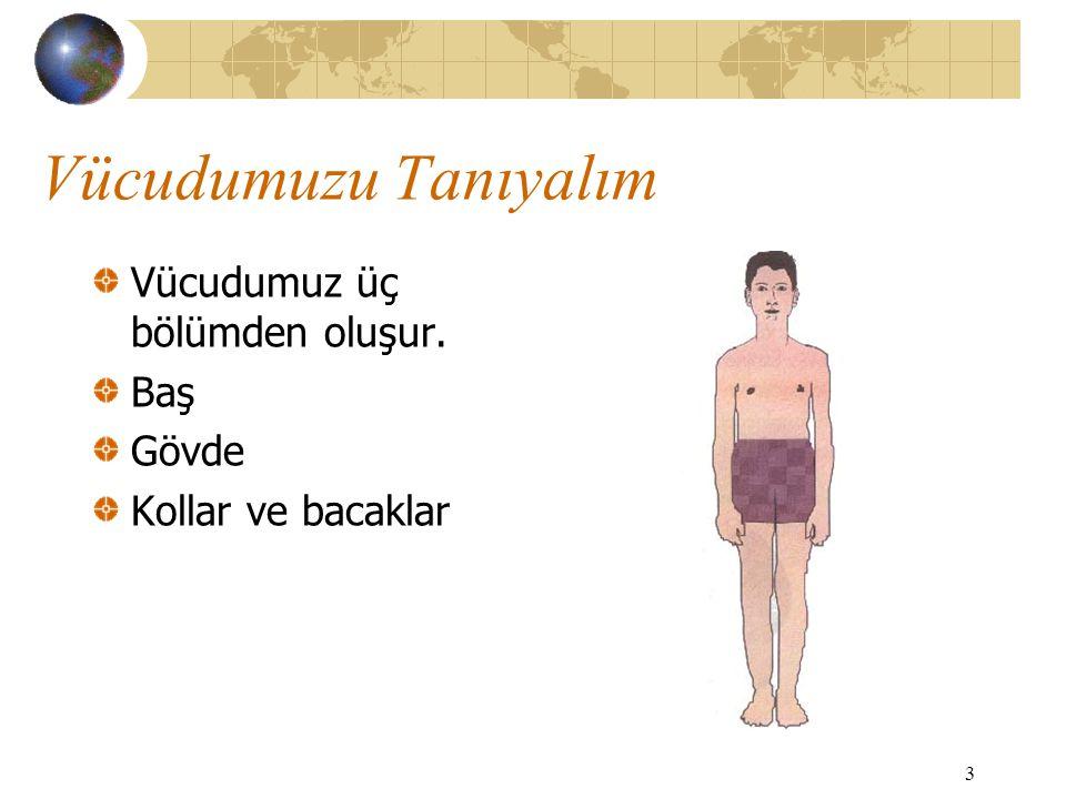 Vücudumuzu Tanıyalım Vücudumuz üç bölümden oluşur. Baş Gövde