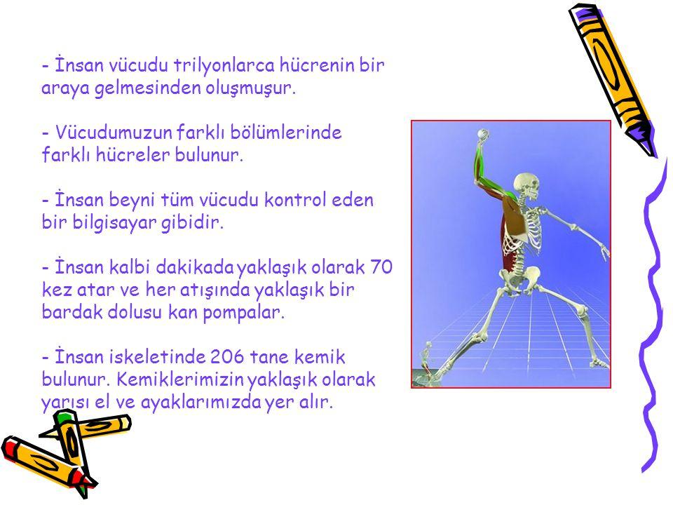 - İnsan vücudu trilyonlarca hücrenin bir araya gelmesinden oluşmuşur.