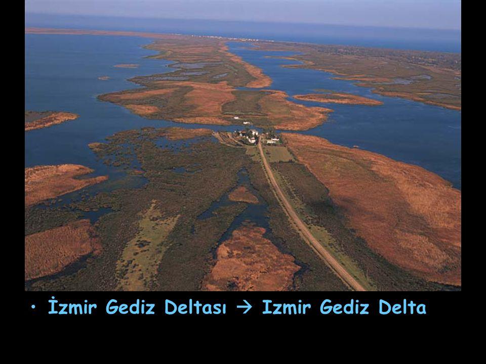 İzmir Gediz Deltası  Izmir Gediz Delta