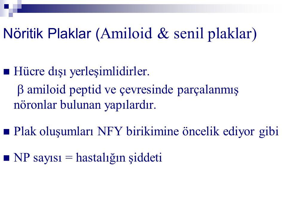 Nöritik Plaklar (Amiloid & senil plaklar)