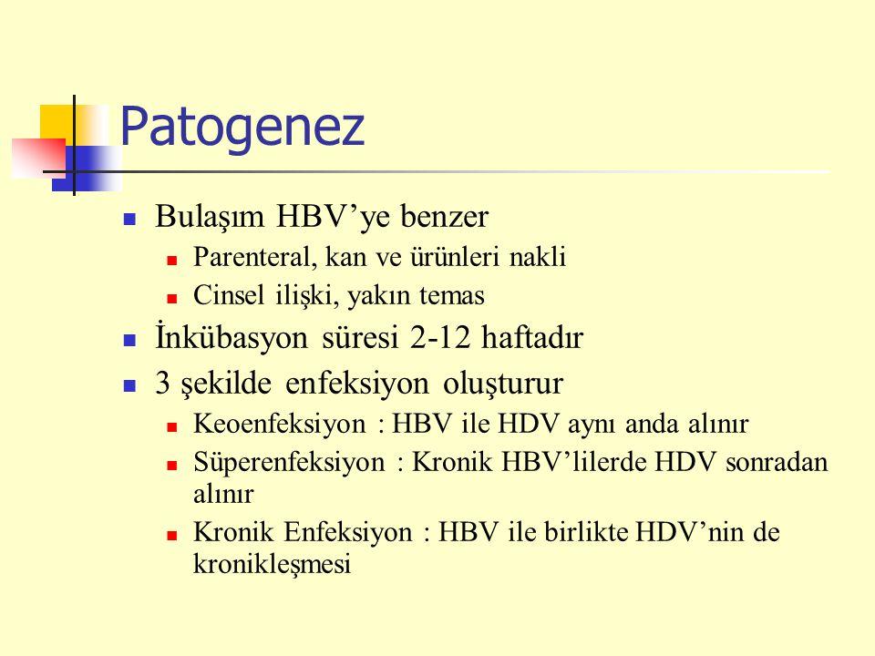 Patogenez Bulaşım HBV'ye benzer İnkübasyon süresi 2-12 haftadır