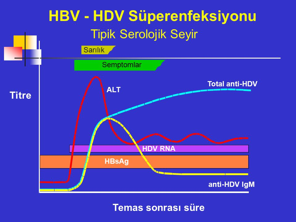 HBV - HDV Süperenfeksiyonu