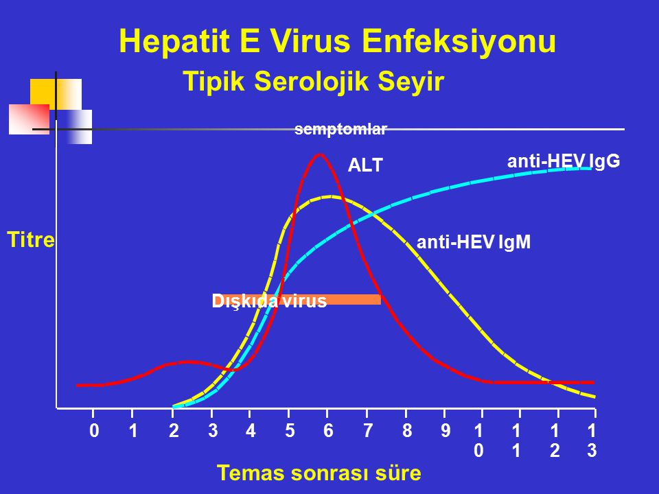 Hepatit E Virus Enfeksiyonu