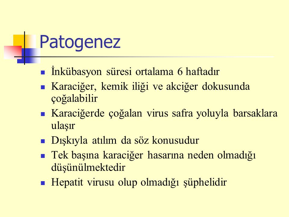 Patogenez İnkübasyon süresi ortalama 6 haftadır