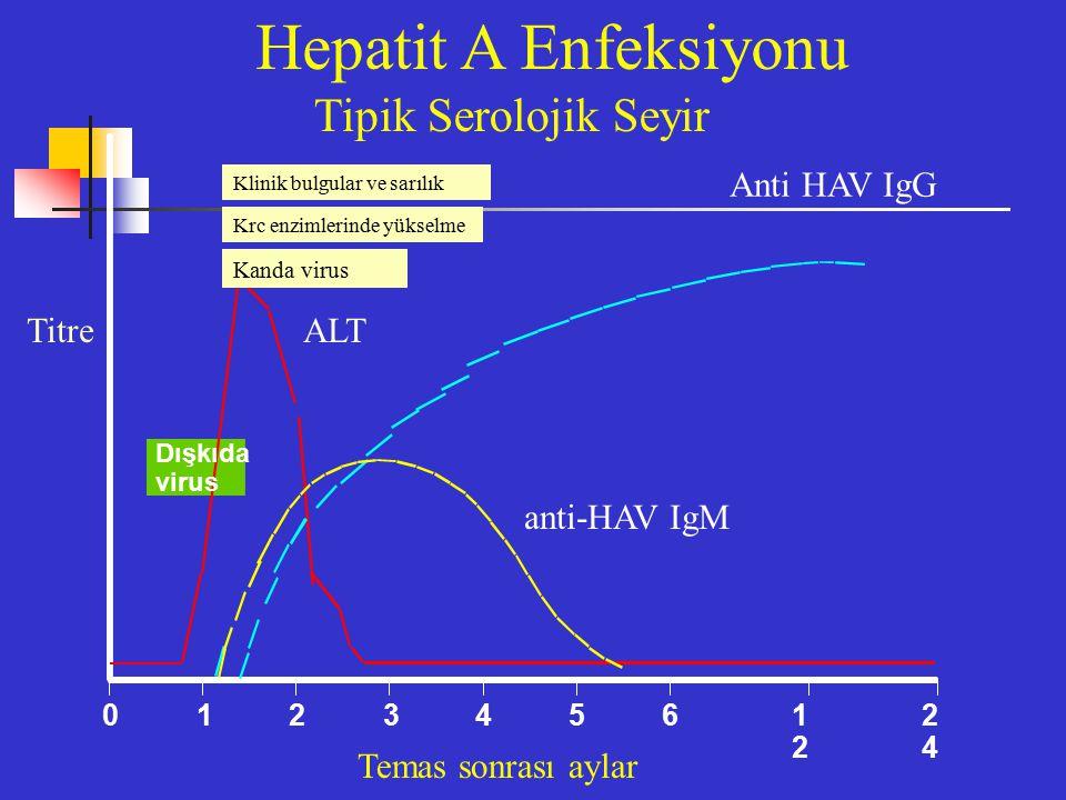 Hepatit A Enfeksiyonu Tipik Serolojik Seyir Anti HAV IgG Titre ALT