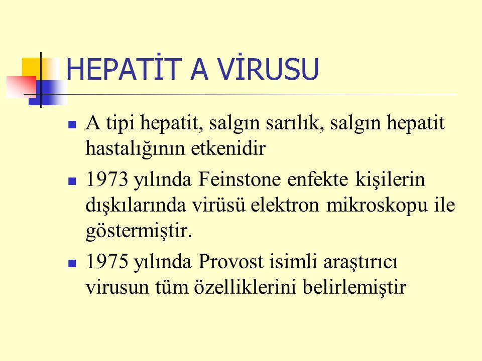 HEPATİT A VİRUSU A tipi hepatit, salgın sarılık, salgın hepatit hastalığının etkenidir.