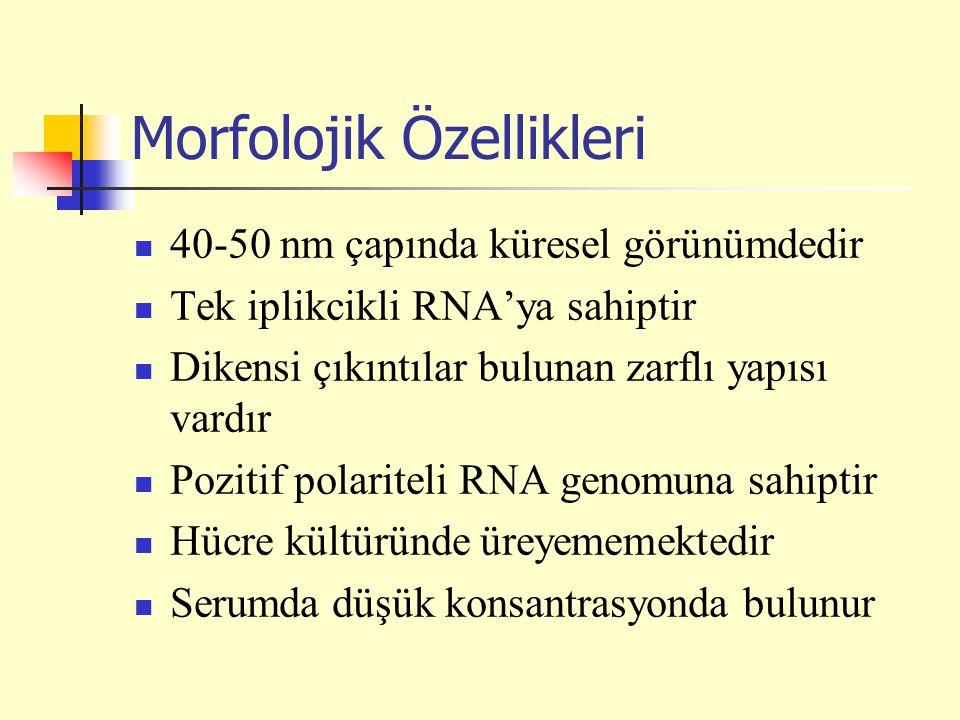 Morfolojik Özellikleri