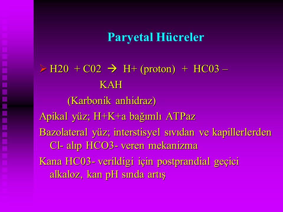 Paryetal Hücreler H20 + C02  H+ (proton) + HC03 – KAH