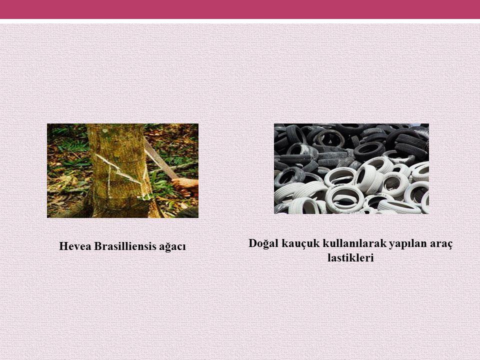 Doğal kauçuk kullanılarak yapılan araç lastikleri
