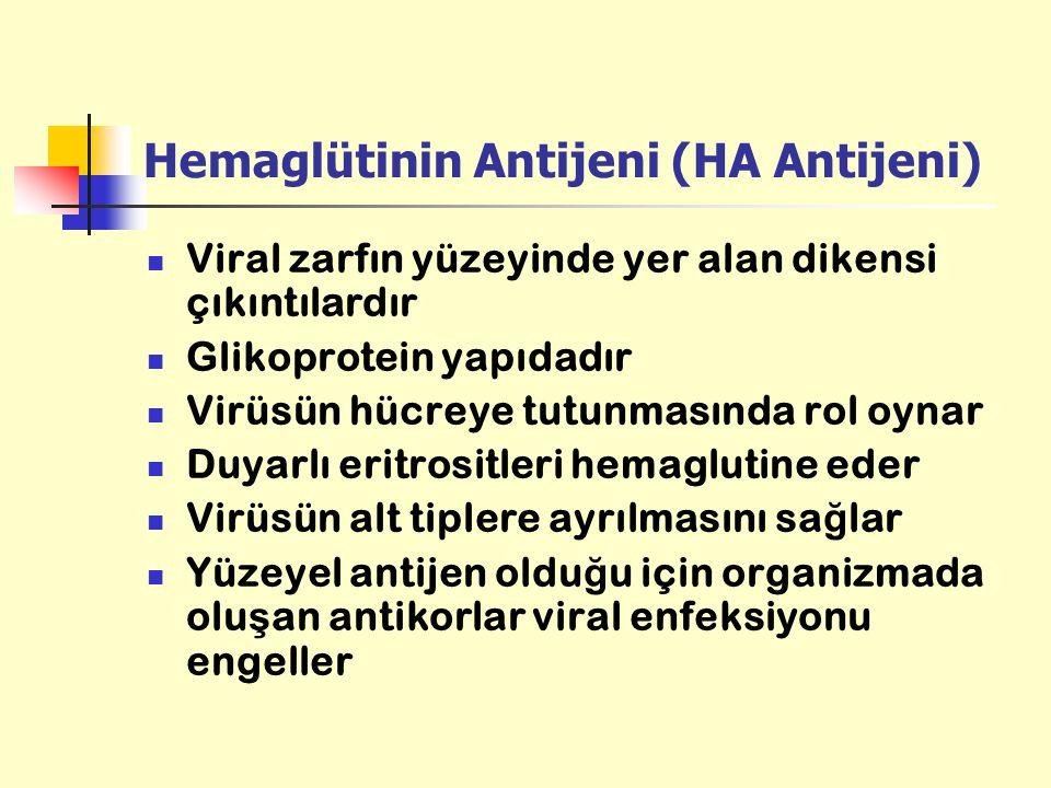 Hemaglütinin Antijeni (HA Antijeni)