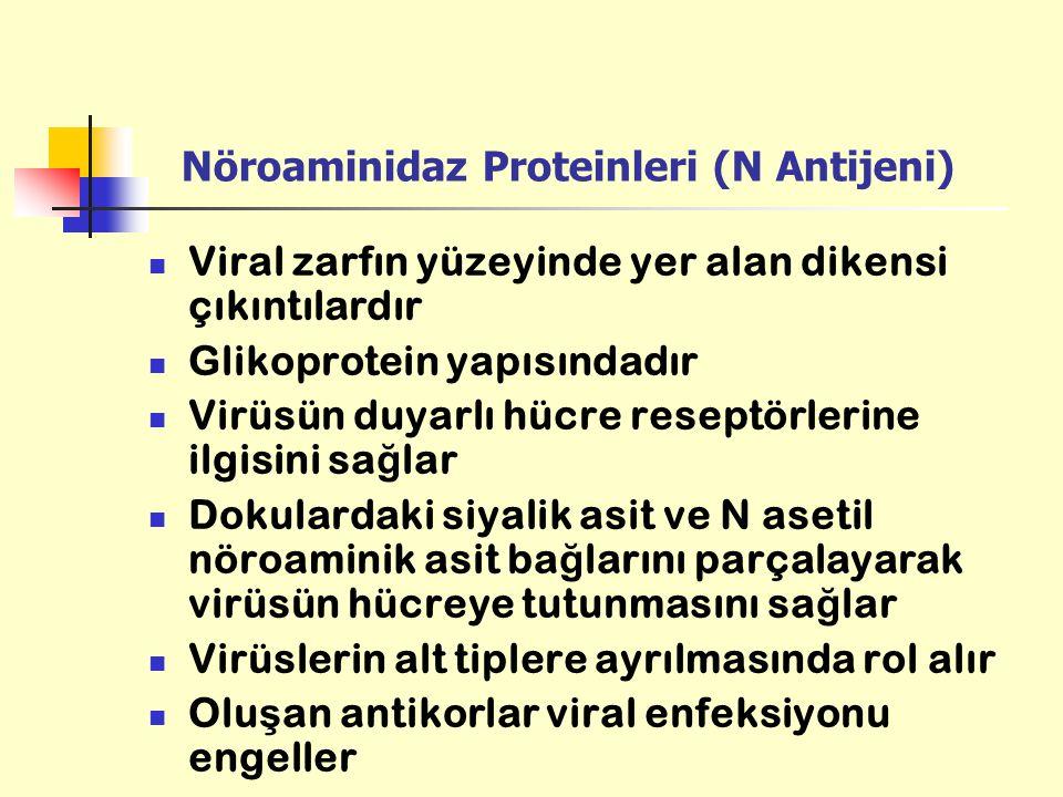 Nöroaminidaz Proteinleri (N Antijeni)