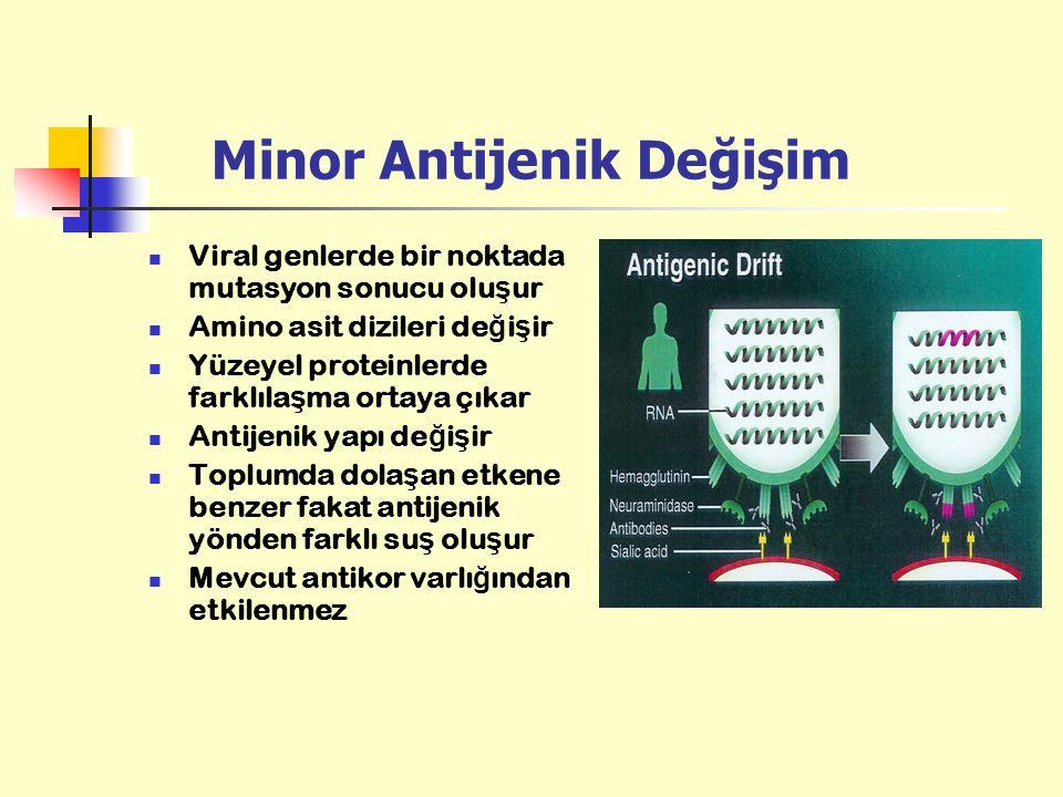 Minor Antijenik Değişim