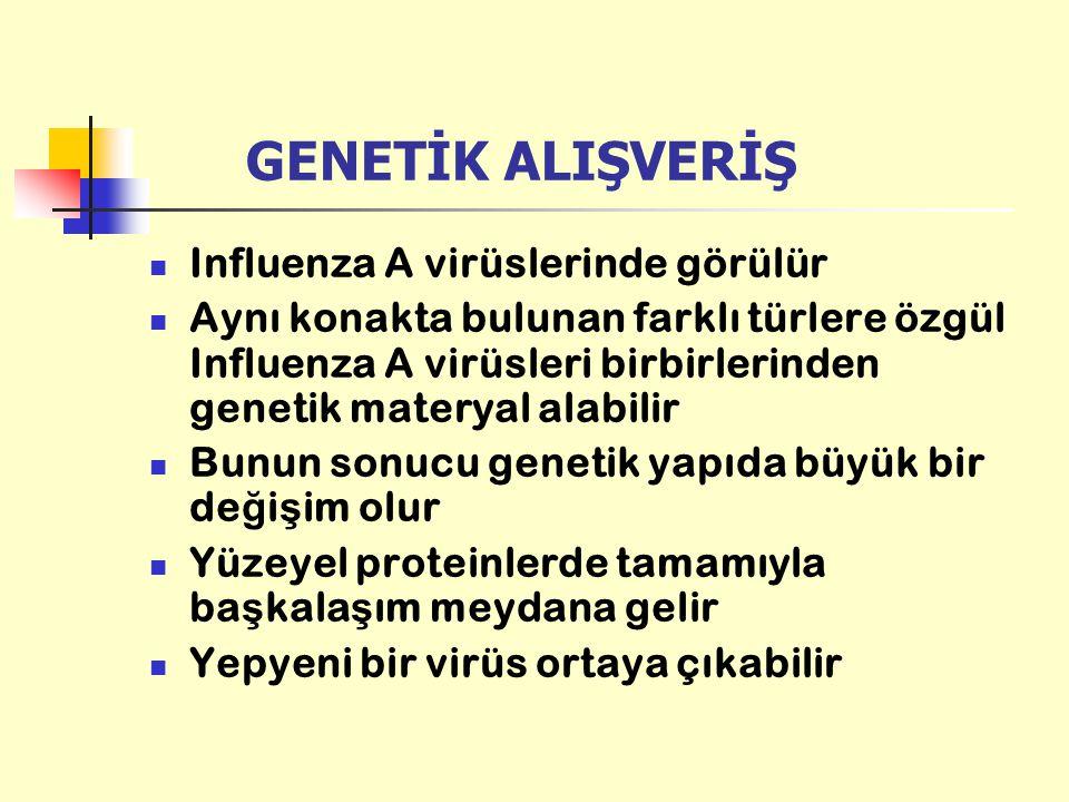 GENETİK ALIŞVERİŞ Influenza A virüslerinde görülür