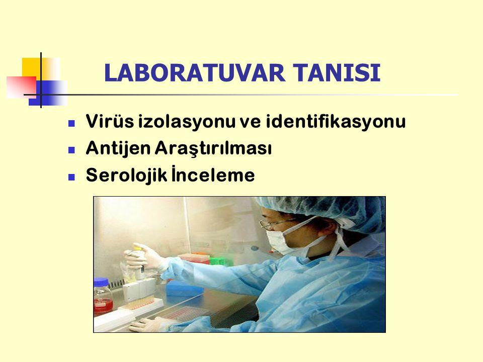LABORATUVAR TANISI Virüs izolasyonu ve identifikasyonu