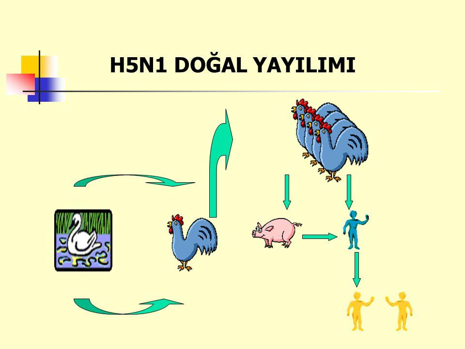 H5N1 DOĞAL YAYILIMI