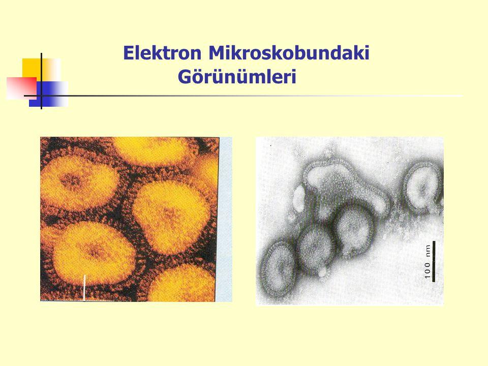 Elektron Mikroskobundaki Görünümleri
