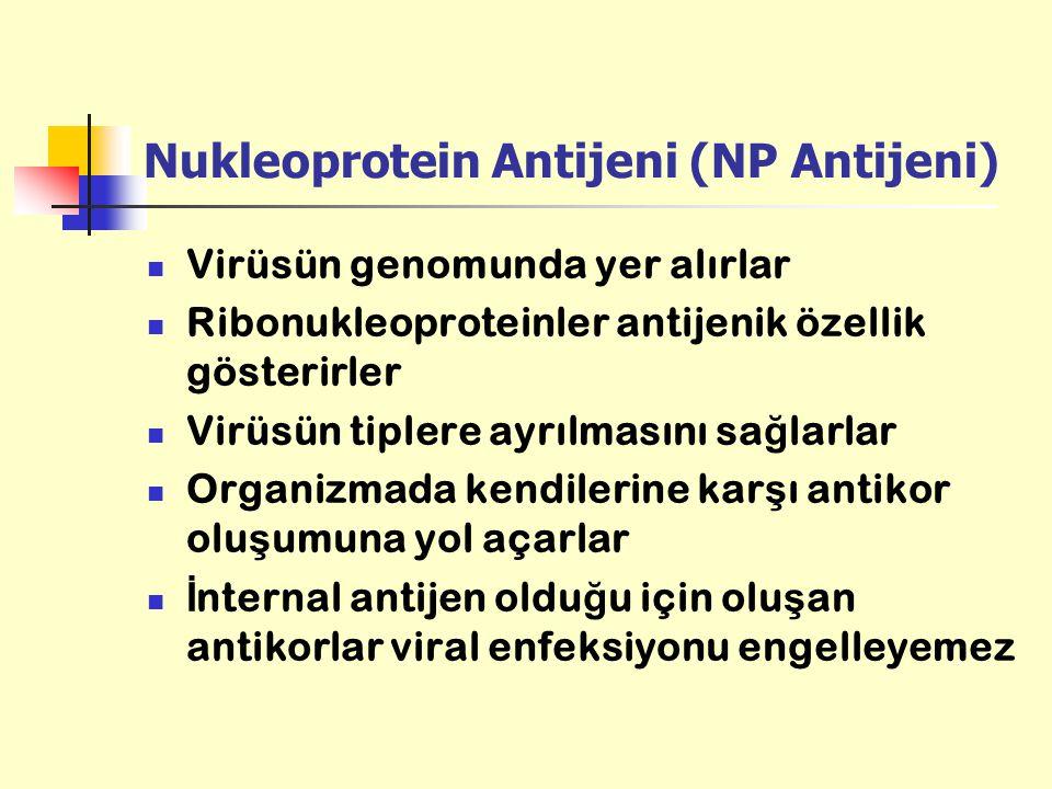 Nukleoprotein Antijeni (NP Antijeni)