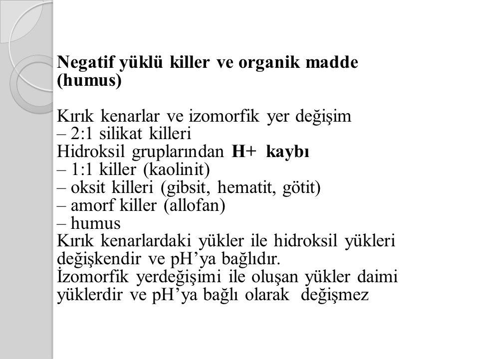 Negatif yüklü killer ve organik madde (humus)