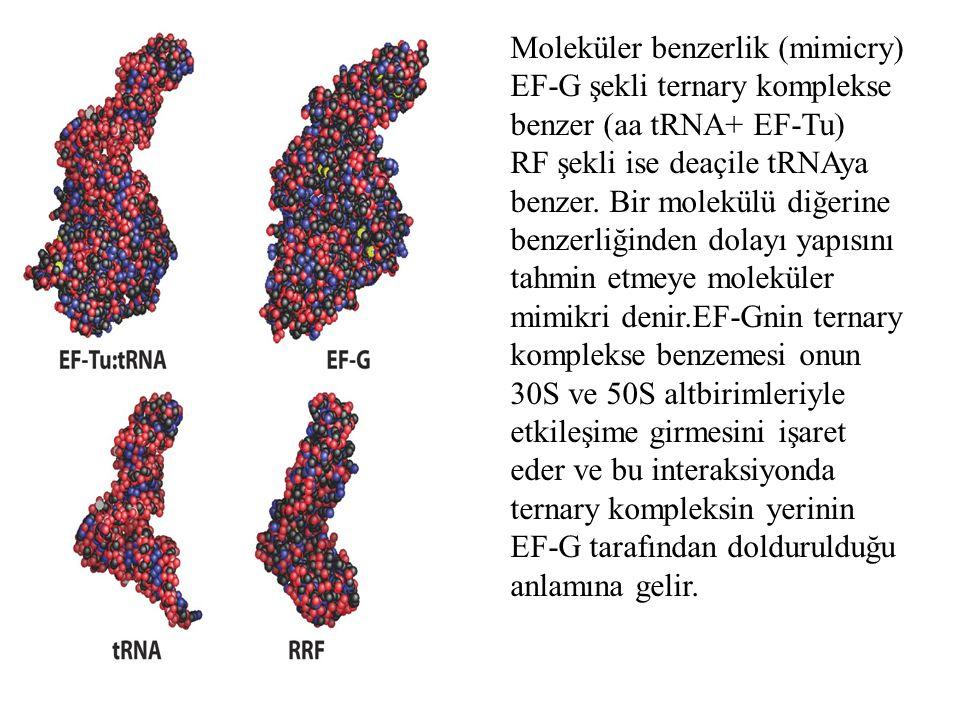 Moleküler benzerlik (mimicry)